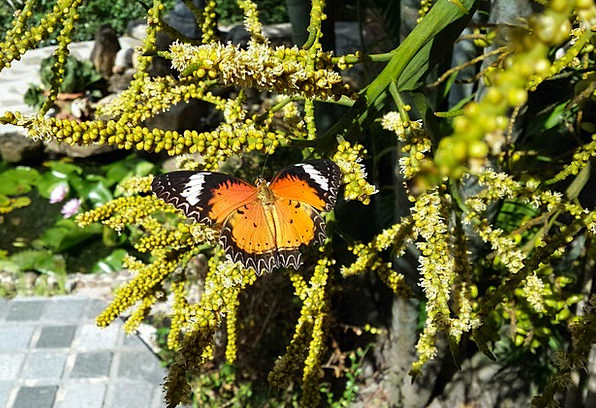Butterfly Landscapes Countryside Nature Plants Flo