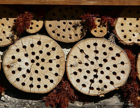 Tree Grates Insect Hotel Drill Holes School Biolog