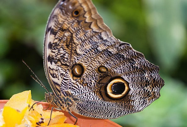 Butterfly Judgments Exotic Unusual Eyes Wing Tropi