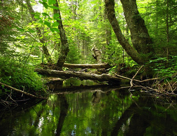 Stream Watercourse Landscapes Woodland Nature Cree