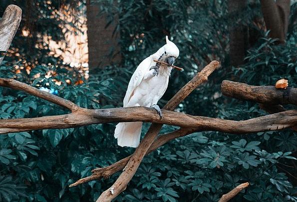 Parrot Imitator Fowl Cute Attractive Bird Beautifu