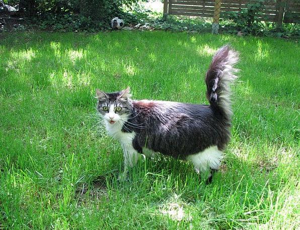 Cat Feline Domesticated Garden Plot Pet Meadow Gre