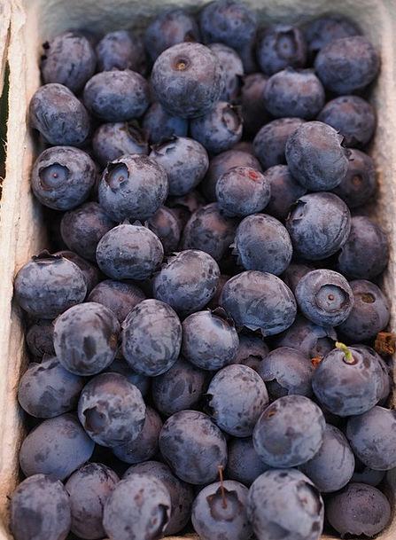 Sloes Fruits Ovaries Berries Blue Azure Amygdaleae