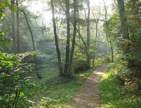 Forest Woodland Landscapes Nature Denmark Path Lea