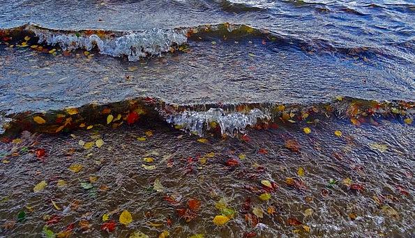 See Understand Upsurge Leaves Greeneries Wave Autu