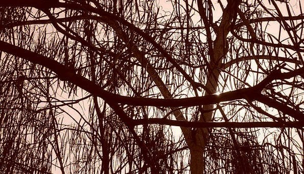Trees Plants Textures Backgrounds Branches Twigs S