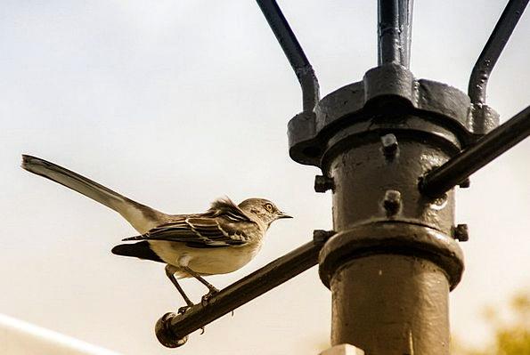 Bird Fowl Balanced Urban City Perched Lantern Lamp