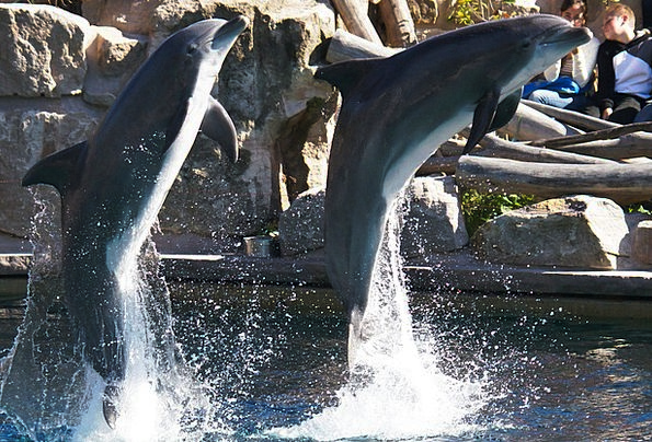 Dolphins Landscapes Faunae Nature Nature Countrysi