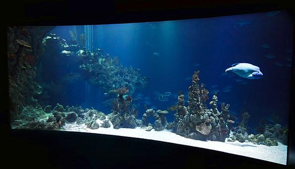 Animal Physical Aquatic Water Aquarium Fish Blue A