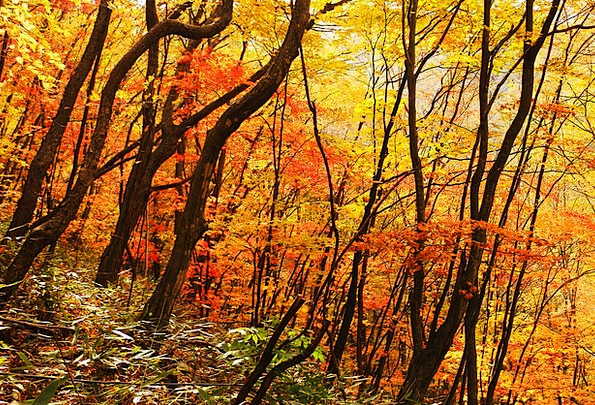 Autumn Fall Landscapes Scenery Nature Autumn Leave