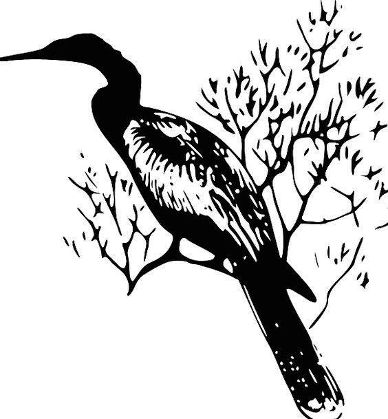 Darter Bird Fowl Snake-Bird Waterbird Melanogaster