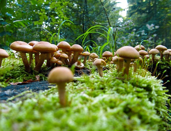 Mushrooms Burgeons Landscapes Countryside Nature A