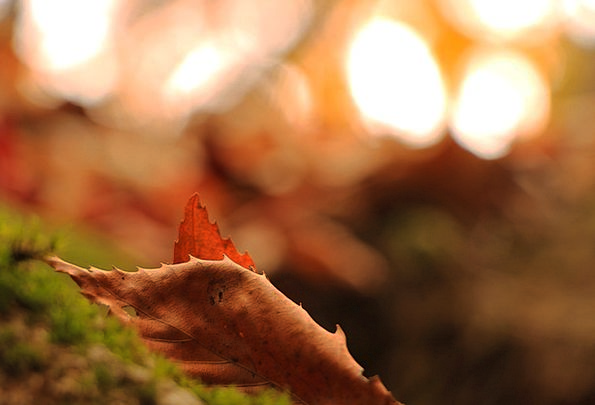 Autumn Fall Reminiscence Leaves Greeneries Memory
