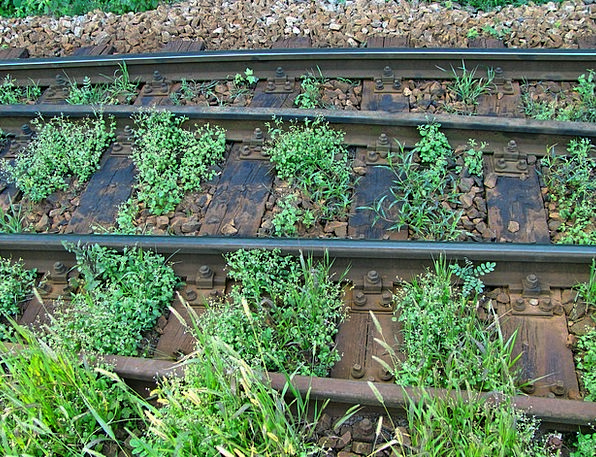 Rails Bars Landscapes Dense Nature Railroad Tracks