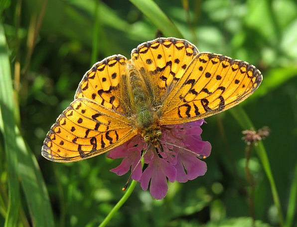 Butterfly Landscapes Countryside Nature Macro Inst
