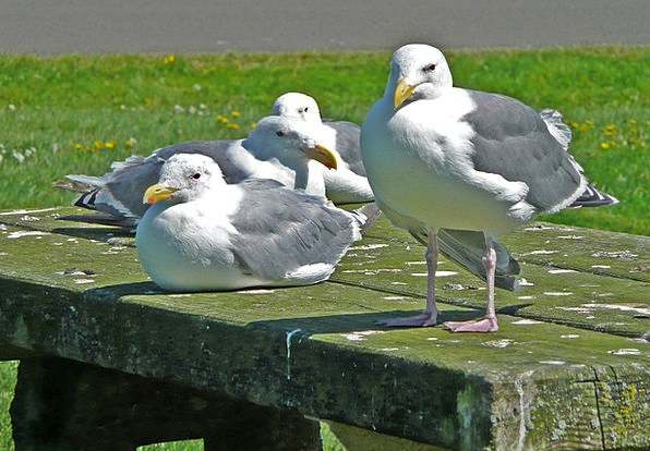 Seagulls Landscapes Nature Birds Natures Waterbird