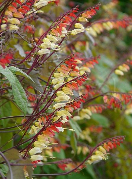Star Winds Landscapes Nature Flower Floret Quamocl