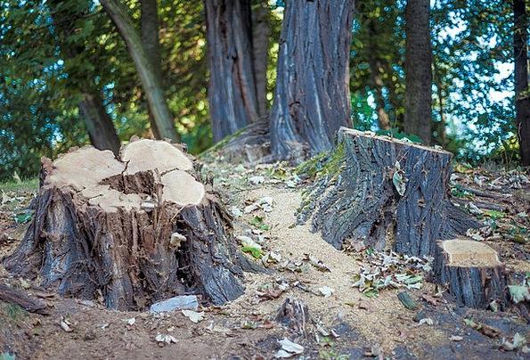Tree Stump Landscapes Plants Nature Forest Woodlan