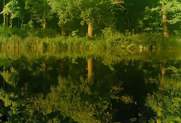 Reflection Likeness Landscapes Sapling Nature Wate