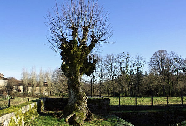 Winter Tree Landscapes Nature Gnarled Tree Leafles