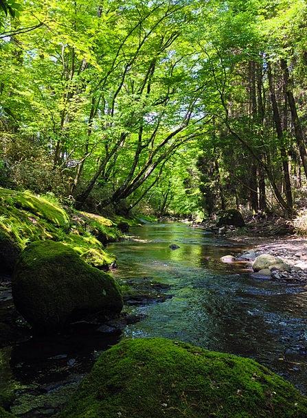 River Stream Lime Japan Green Water Aquatic Natura