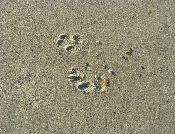 Dog Canine Patterns Footprints Paths Prints Sand S