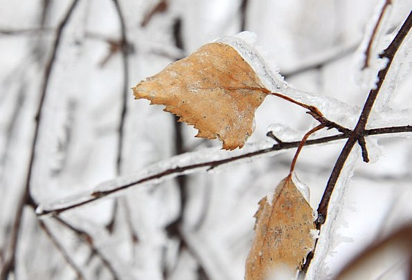 Branch Division Landscapes Chocolate Nature Cold E