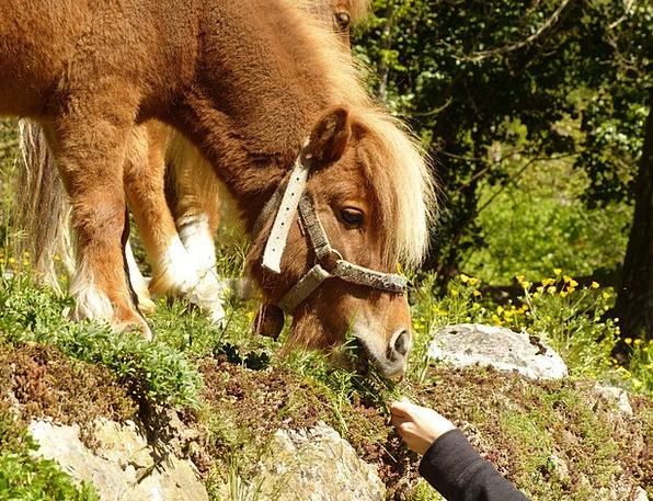 Pony Drink Nourishing Food Grass Lawn Feeding Mane