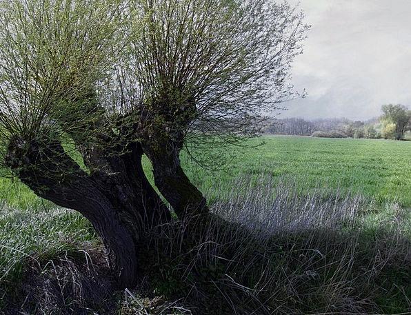 Moor Heath Landscapes Nature Moorland Landscape Na