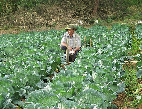 Farmer Agriculturalist Reaping Vegetables Potatoes