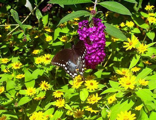 Butterfly Bug Black Dark Insect Leaves White Snowy