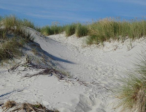 Sand Dunes Bank Sand Shingle Dune Dune Grass Coast