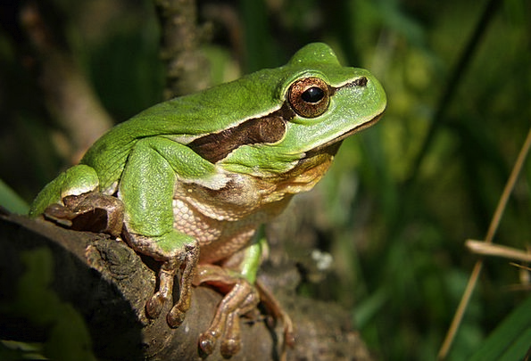 Tree-Frog Landscapes Nature Nature Countryside Fro