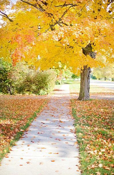 Sidewalk Creamy Tree Sapling Yellow Walkway Autumn