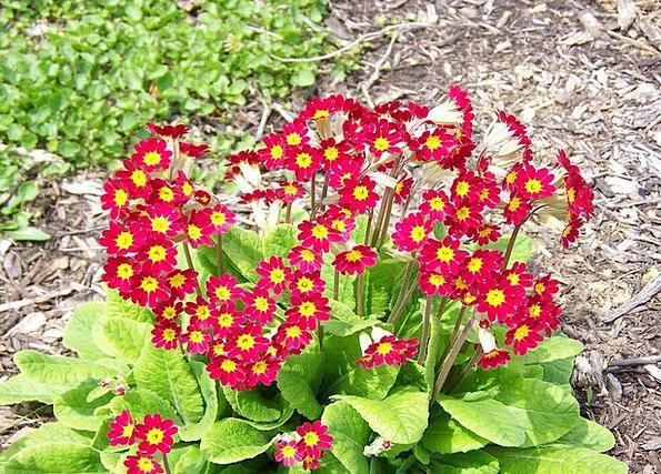 Flowers Plants Landscapes Scenery Nature Nature Co