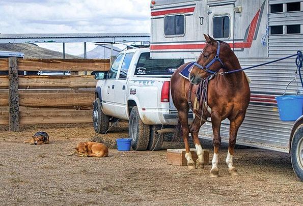 Horse Mount Canine Animal Physical Dog Truck Car W