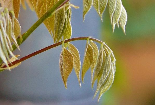 Leaves Greeneries Landscapes Hiker Nature Whip Vin