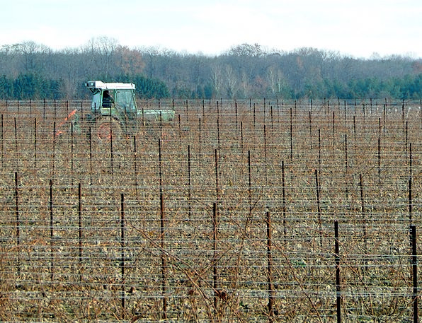 Vineyard Winery Farming Undeveloped Agriculture Gr