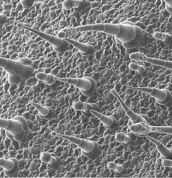 Epidermis Skin Periodical Electron Microscopy Jour