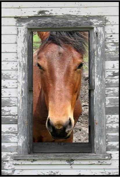 Horse Mount Horse Stable Horse Barn Horse Ranch Eq