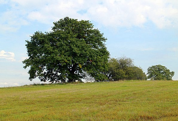 Tree Sapling Landscapes Separately Nature Nature C