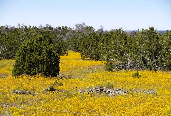 Yellow Creamy Landscapes Nature Field Arena Rape N