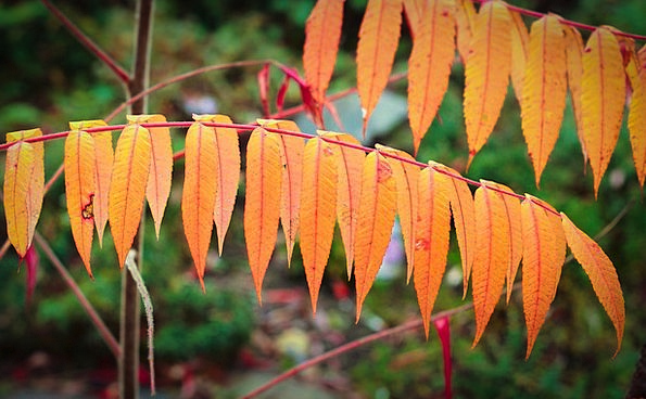 Fall Leaves Branch Division Orange Leaves Autumn F