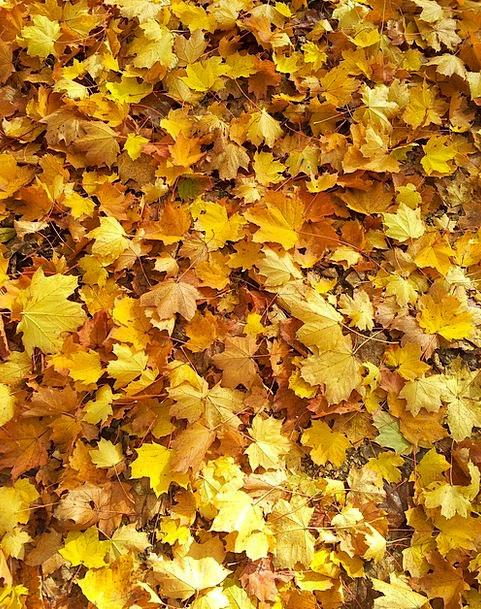 Leaves Greeneries Landscapes Nature Autumn Fall Fa