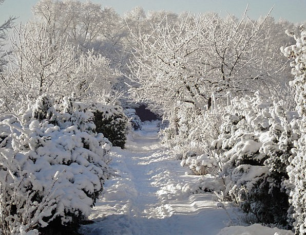 Winter Season Snowflake Garden Plot Snow Away Abse