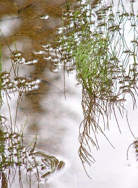 Pond Pool Aquatic Mirroring Reflecting Water Gloss