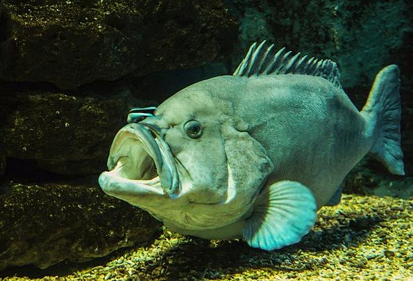 Animal Physical Marine Meeresbewohner Sea Fish Ang