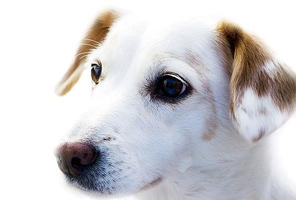 Dog Canine Physical Friend Acquaintance Animal Bac