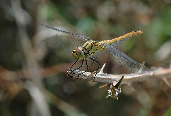 Insect Bug Macro Instruction Dragonfly Nature Coun
