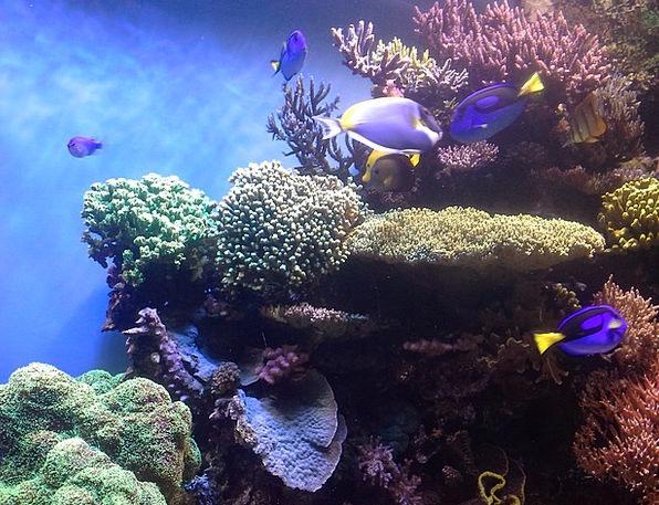 Coral Reef Island Aquarium Corals Monterey Bay Aqu